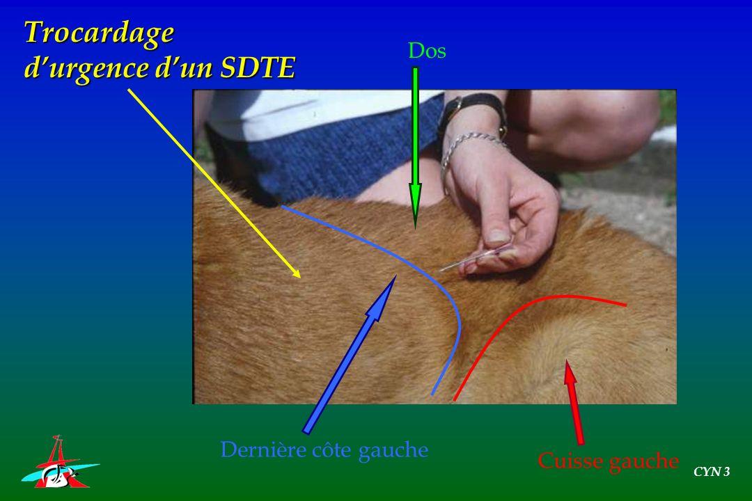 Dos Cuisse gauche Dernière côte gauche Trocardage durgence dun SDTE CYN 3