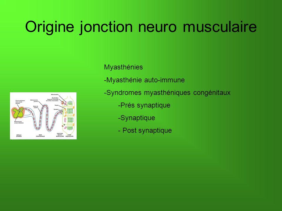 Origine jonction neuro musculaire Myasthénies -Myasthénie auto-immune -Syndromes myasthéniques congénitaux -Prés synaptique -Synaptique - Post synapti