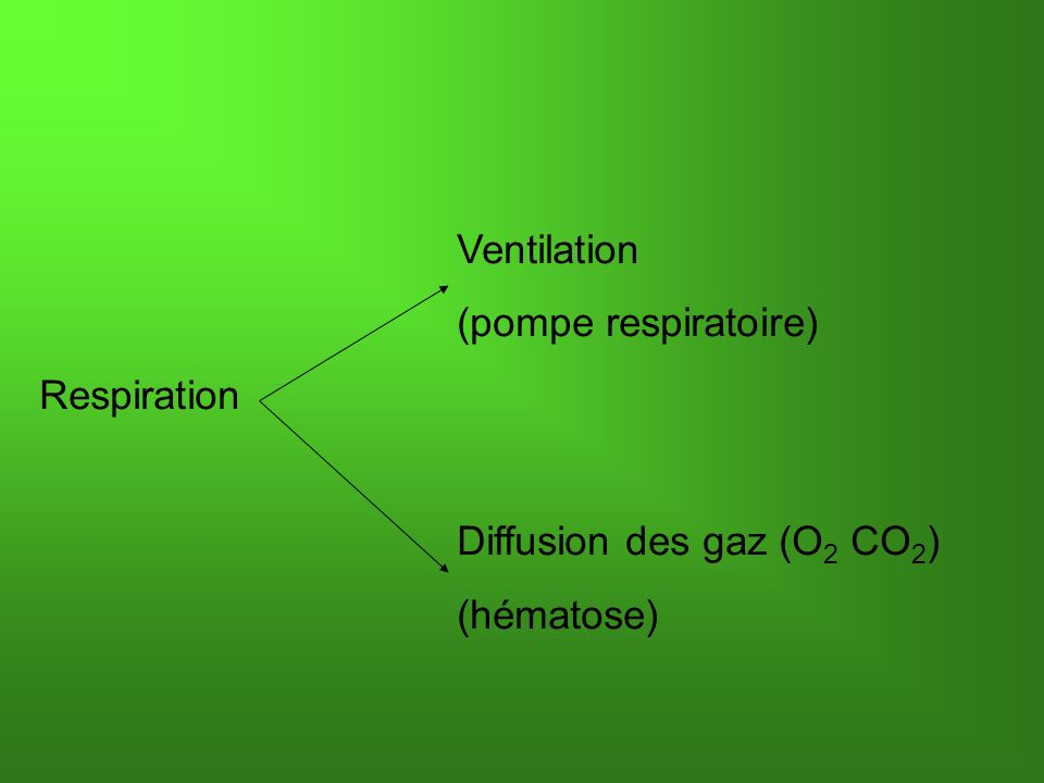 Ventilation (pompe respiratoire) Respiration Diffusion des gaz (O 2 CO 2 ) (hématose)