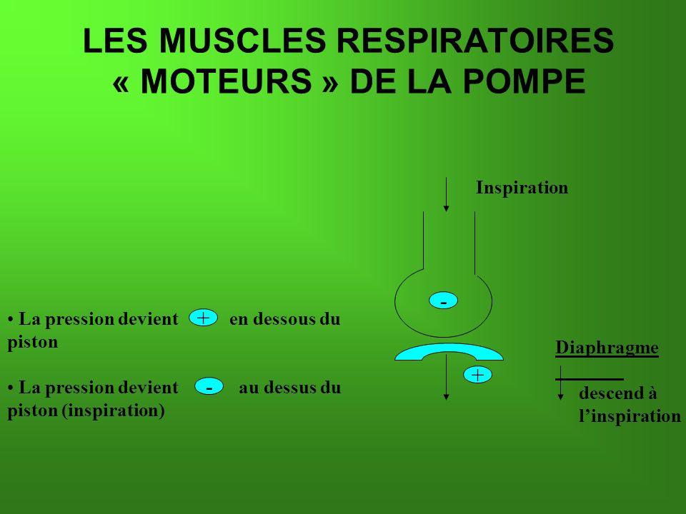 Inspiration La pression devient en dessous du piston La pression devient au dessus du piston (inspiration) LES MUSCLES RESPIRATOIRES « MOTEURS » DE LA POMPE - - + + Diaphragme descend à linspiration