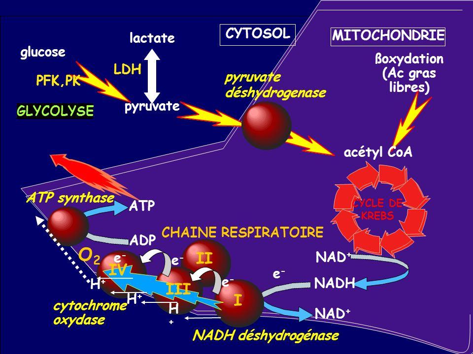 SEPSIS ET CATECHOLAMINES glycogène pyruvate lactate ADP ATP glucose 6-P Compartiment oxydatif O2O2 mitochondrie Compartiment glycolytique glycogénolyse glycolyse lactate + + AMPc adrénaline pompe Na/K 2K 3Na James et al.