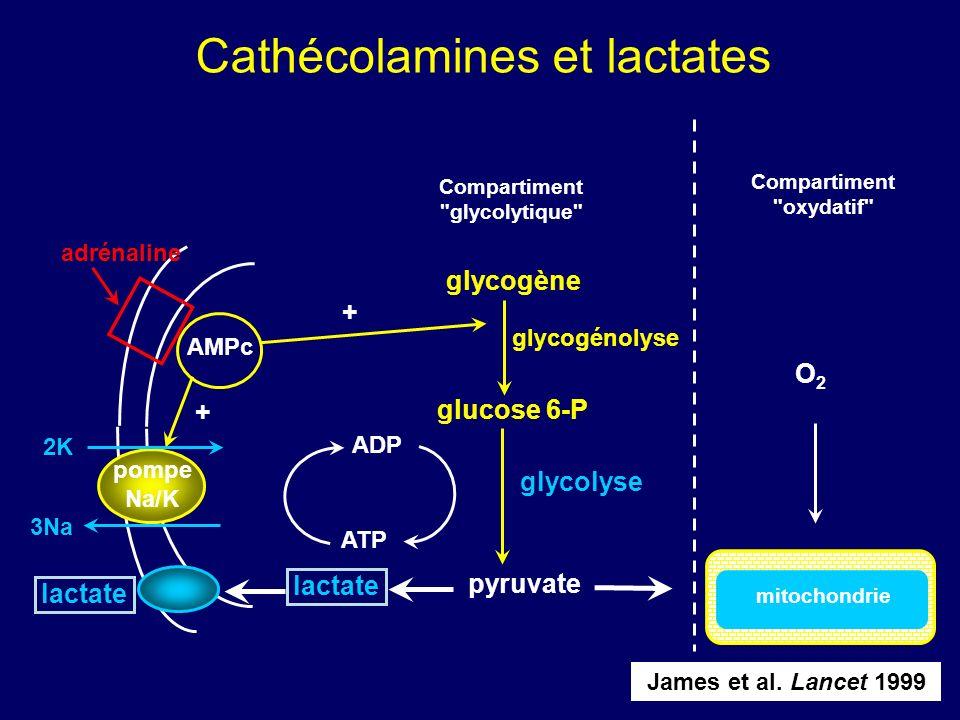 SEPSIS ET CATECHOLAMINES glycogène pyruvate lactate ADP ATP glucose 6-P Compartiment