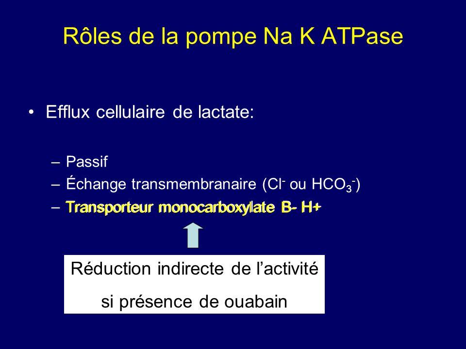 Rôles de la pompe Na K ATPase Efflux cellulaire de lactate: –Passif –Échange transmembranaire (Cl - ou HCO 3 - ) –Transporteur monocarboxylate B- H+ R