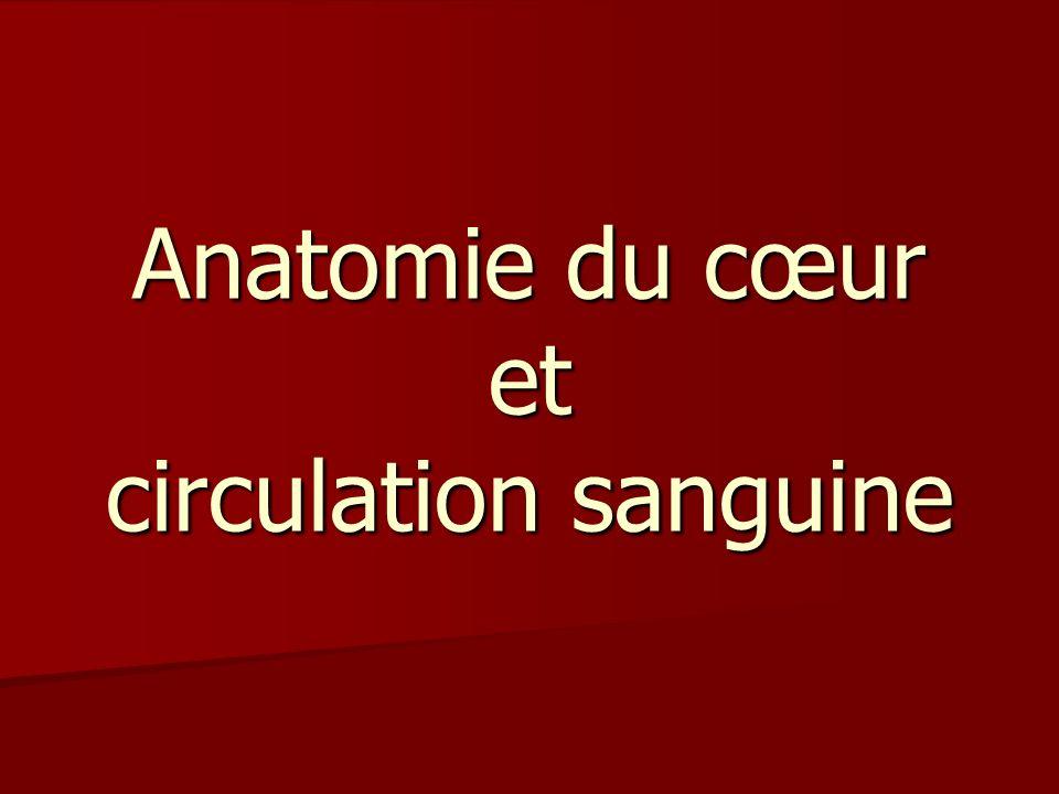 Sources: Sources: -Fondation des maladies du cœur www.fondationdesmaladiesducoeur.ca -Le ptit guide du cœur.