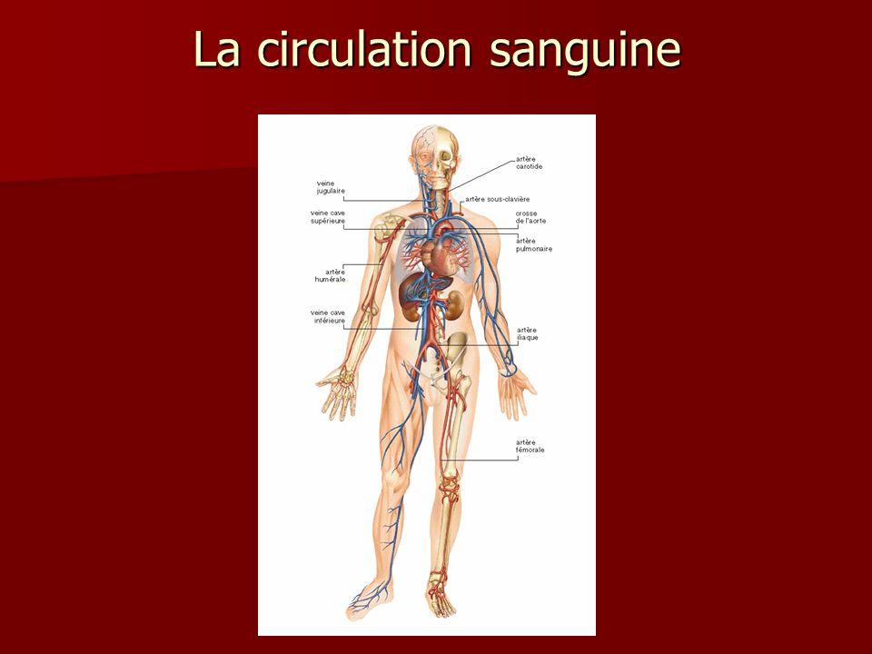 Le coeur se contracte environ 50 à Le coeur se contracte environ 50 à 100 fois par minute.