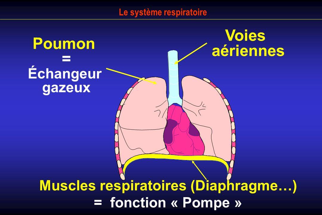 Poumon = Échangeur gazeux Muscles respiratoires (Diaphragme…) = fonction « Pompe » Voies aériennes Le système respiratoire