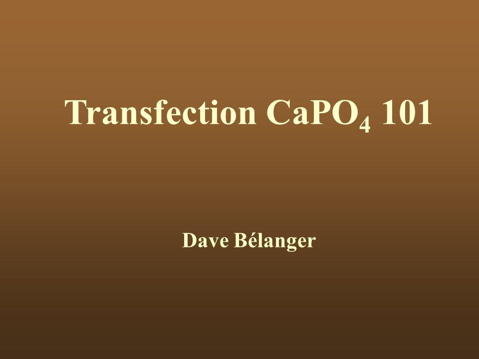 Transfection CaPO 4 101 Dave Bélanger