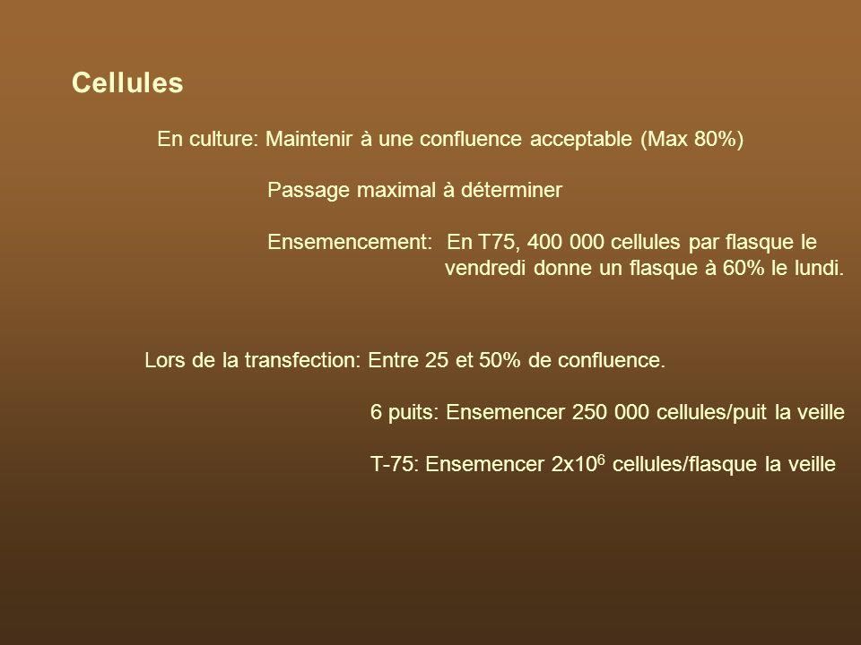 En culture: Maintenir à une confluence acceptable (Max 80%) Passage maximal à déterminer Ensemencement: En T75, 400 000 cellules par flasque le vendre