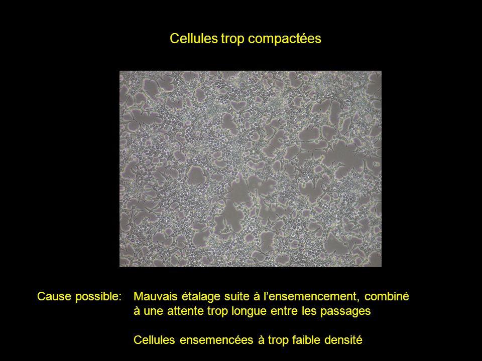 Cellules trop compactées Cause possible:Mauvais étalage suite à lensemencement, combiné à une attente trop longue entre les passages Cellules ensemenc