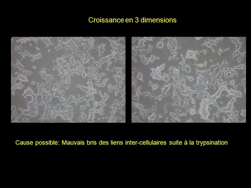Croissance en 3 dimensions Cause possible: Mauvais bris des liens inter-cellulaires suite à la trypsination