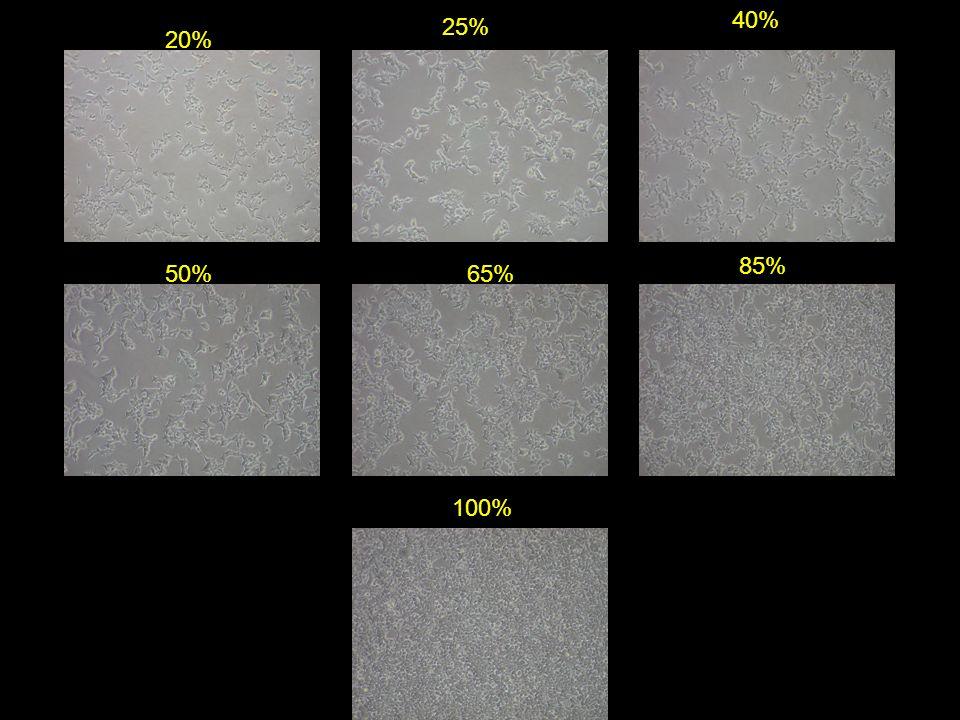 20% 25% 40% 50% 85% 100% 65%