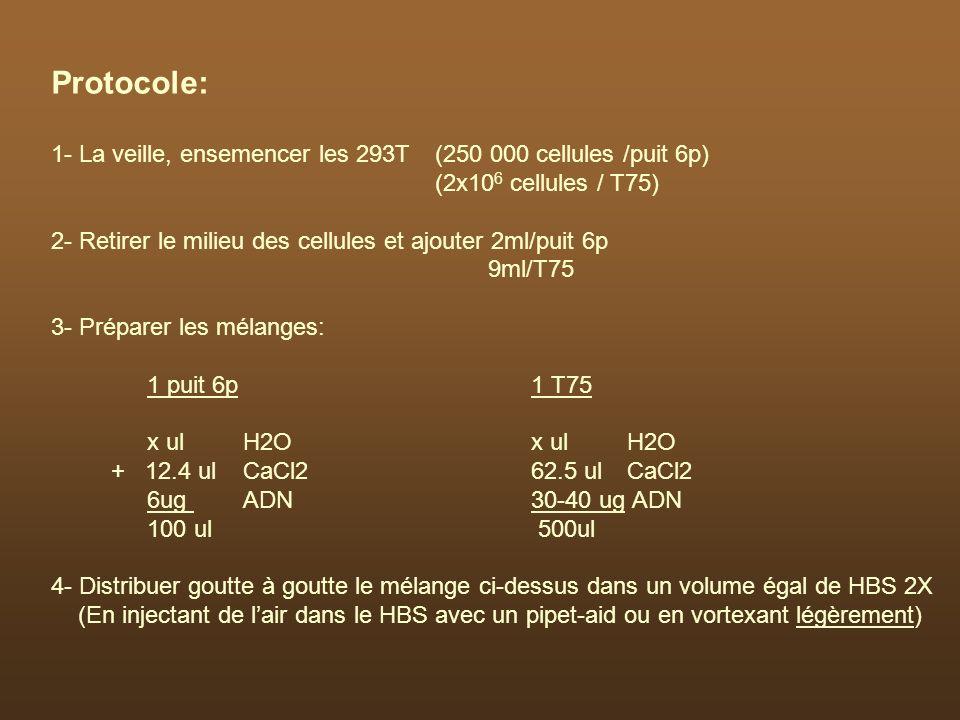 Protocole: 1- La veille, ensemencer les 293T (250 000 cellules /puit 6p) (2x10 6 cellules / T75) 2- Retirer le milieu des cellules et ajouter 2ml/puit
