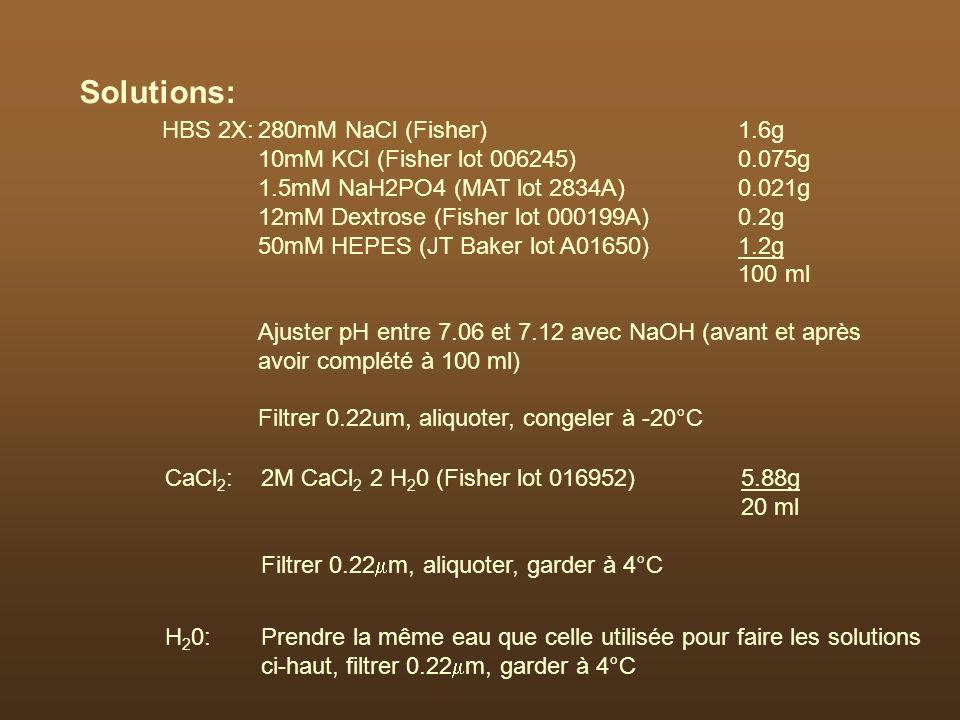 Solutions: CaCl 2 :2M CaCl 2 2 H 2 0 (Fisher lot 016952)5.88g 20 ml Filtrer 0.22 m, aliquoter, garder à 4°C H 2 0:Prendre la même eau que celle utilis