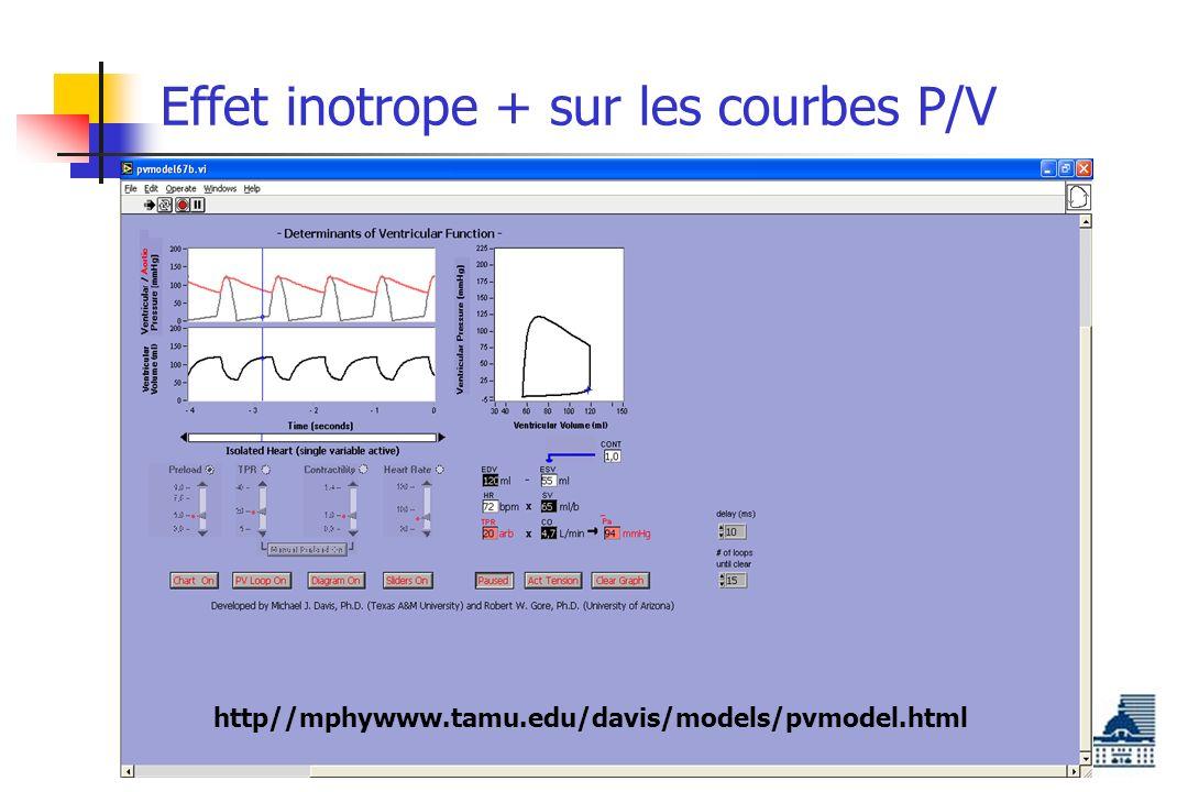 Effet inotrope + sur les courbes P/V http//mphywww.tamu.edu/davis/models/pvmodel.html