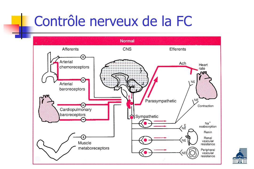 Contrôle nerveux de la FC