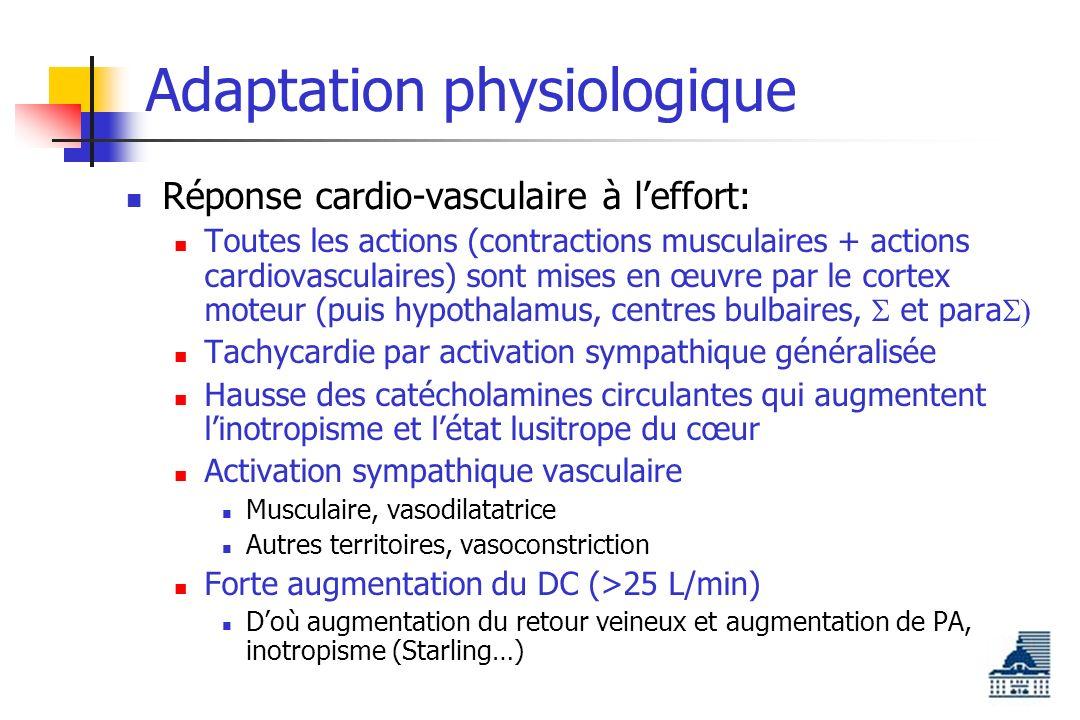 Adaptation physiologique Réponse cardio-vasculaire à leffort: Toutes les actions (contractions musculaires + actions cardiovasculaires) sont mises en œuvre par le cortex moteur (puis hypothalamus, centres bulbaires, et para Tachycardie par activation sympathique généralisée Hausse des catécholamines circulantes qui augmentent linotropisme et létat lusitrope du cœur Activation sympathique vasculaire Musculaire, vasodilatatrice Autres territoires, vasoconstriction Forte augmentation du DC (>25 L/min) Doù augmentation du retour veineux et augmentation de PA, inotropisme (Starling…)