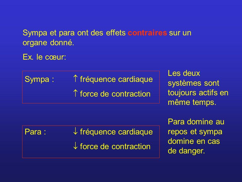 Sympa : fréquence cardiaque force de contraction Para : fréquence cardiaque force de contraction Para domine au repos et sympa domine en cas de danger