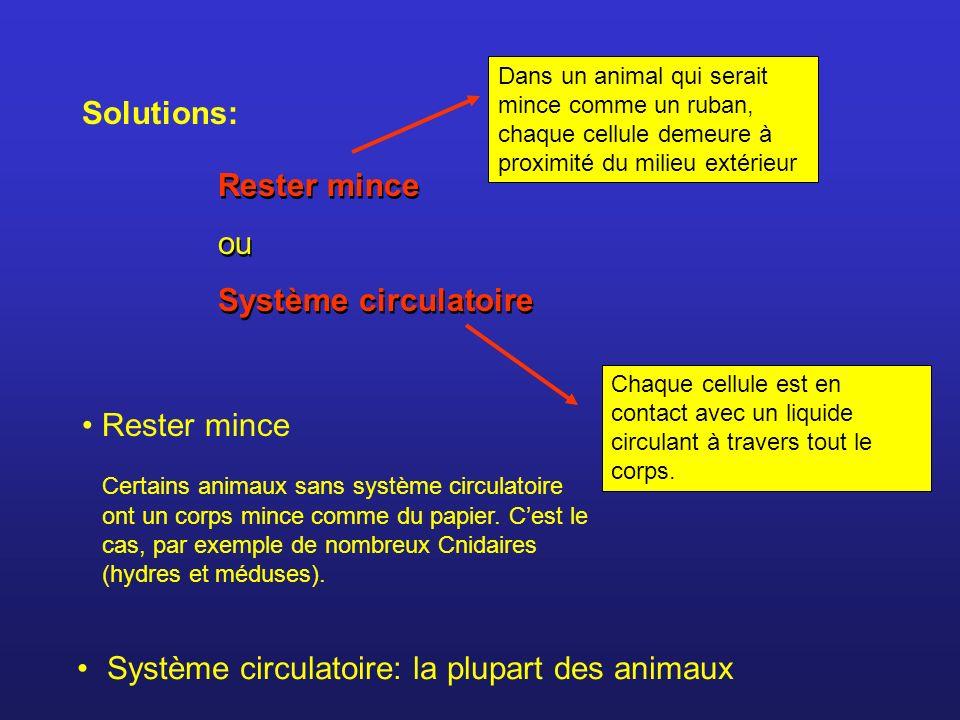 Solutions: Rester mince ou Système circulatoire Rester mince ou Système circulatoire Rester mince Certains animaux sans système circulatoire ont un co
