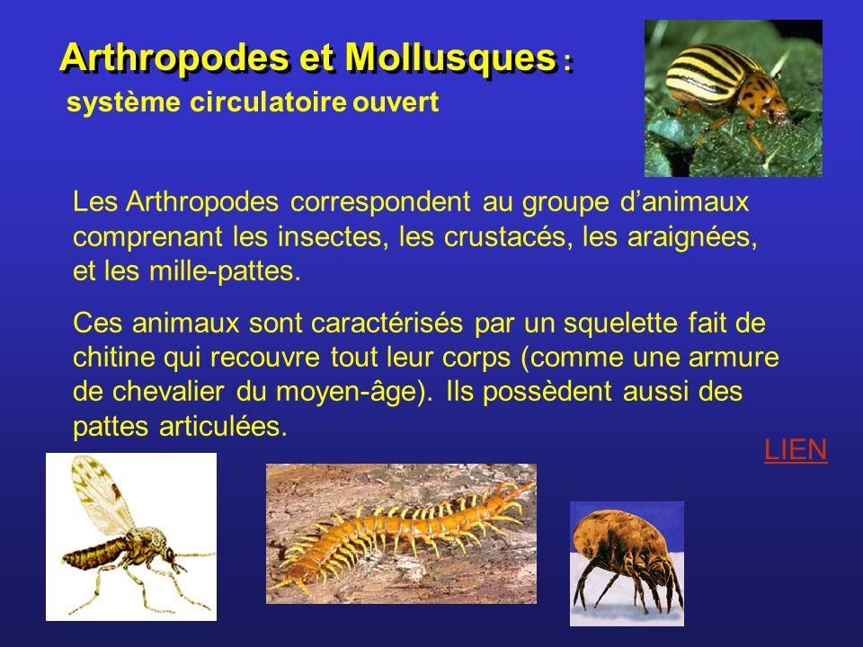 Arthropodes et Mollusques : système circulatoire ouvert Les Arthropodes correspondent au groupe danimaux comprenant les insectes, les crustacés, les a