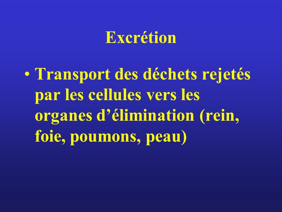 Excrétion Transport des déchets rejetés par les cellules vers les organes délimination (rein, foie, poumons, peau)