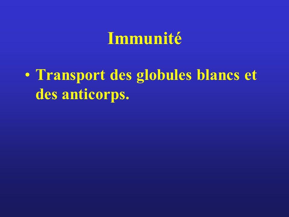 Immunité Transport des globules blancs et des anticorps.