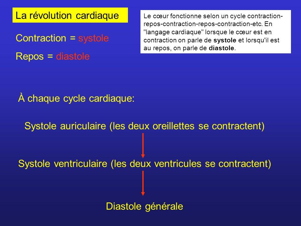 La révolution cardiaque Contraction = systole Repos = diastole À chaque cycle cardiaque: Systole auriculaire (les deux oreillettes se contractent) Sys