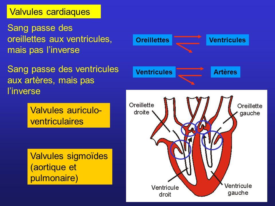 Valvules cardiaques Valvules auriculo- ventriculaires Valvules sigmoïdes (aortique et pulmonaire) Sang passe des oreillettes aux ventricules, mais pas