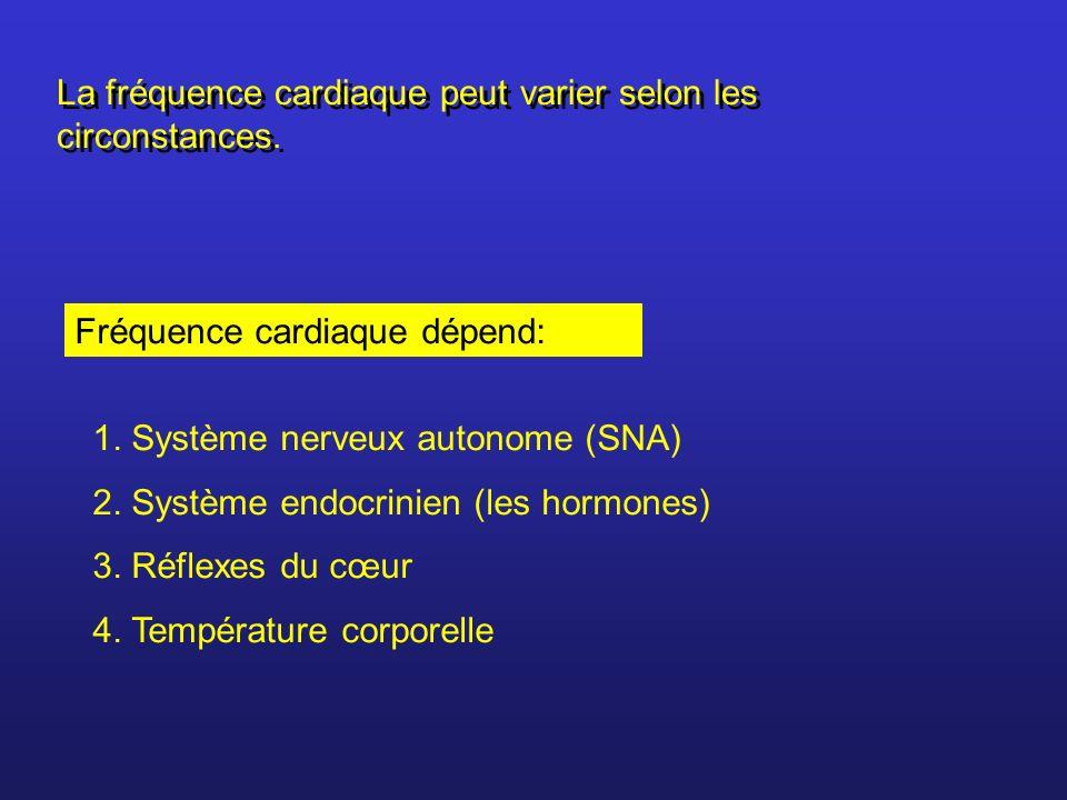 Fréquence cardiaque dépend: 1. Système nerveux autonome (SNA) 2. Système endocrinien (les hormones) 3. Réflexes du cœur 4. Température corporelle La f