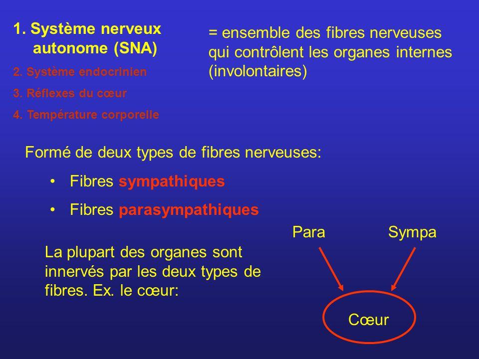 = ensemble des fibres nerveuses qui contrôlent les organes internes (involontaires) Formé de deux types de fibres nerveuses: Fibres sympathiques Fibre