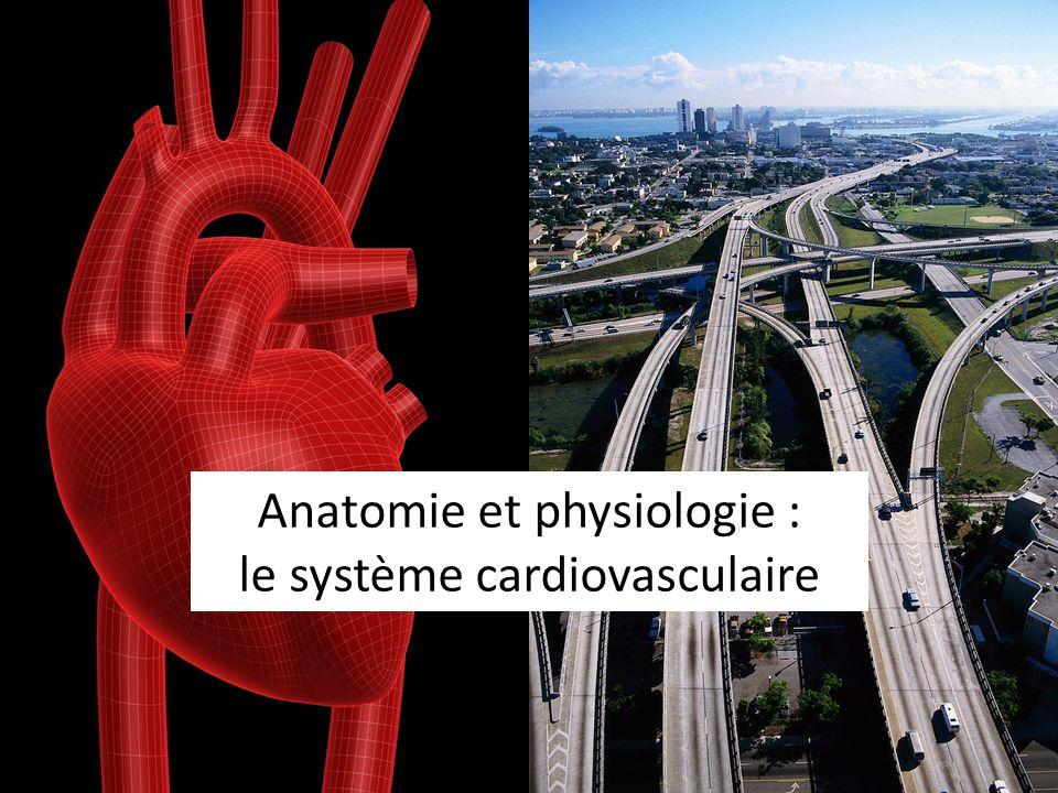 Les caractéristiques générales Le système cardiovasculaire a comme fonction de permettre au sang de transporter les nutriments et loxygène à tout lorganisme.