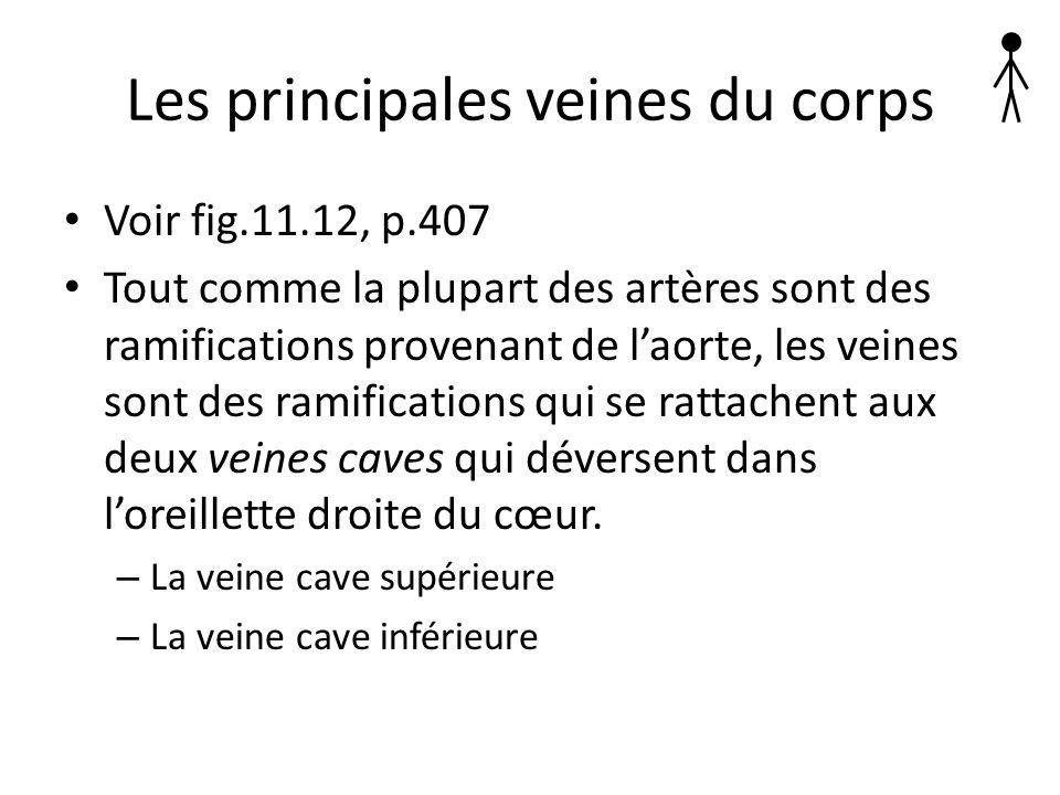 Les principales veines du corps Voir fig.11.12, p.407 Tout comme la plupart des artères sont des ramifications provenant de laorte, les veines sont de