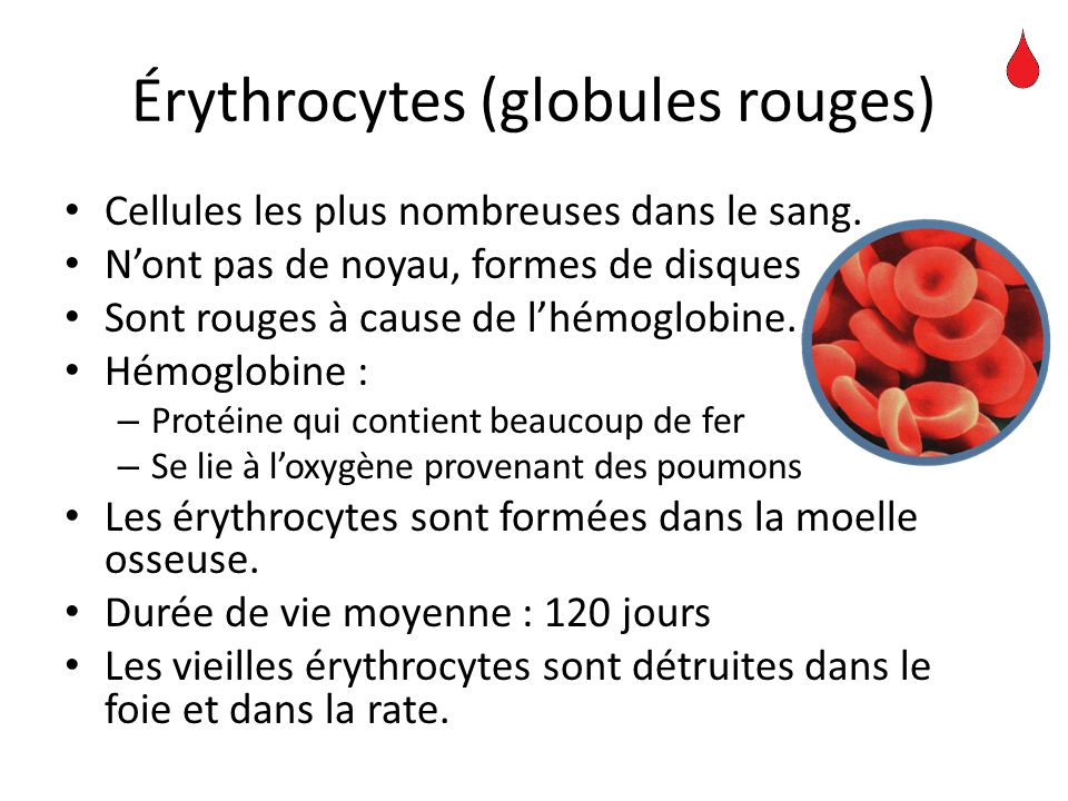 Érythrocytes (globules rouges) Cellules les plus nombreuses dans le sang. Nont pas de noyau, formes de disques Sont rouges à cause de lhémoglobine. Hé