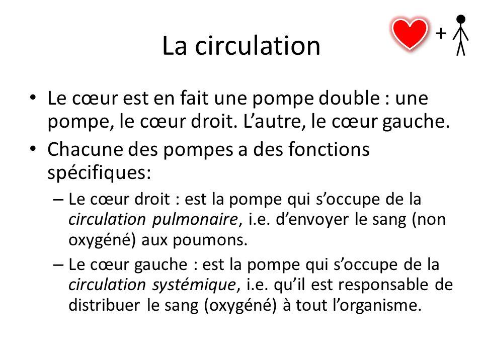 La circulation Le cœur est en fait une pompe double : une pompe, le cœur droit. Lautre, le cœur gauche. Chacune des pompes a des fonctions spécifiques