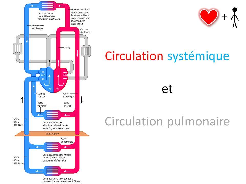 Circulation systémique et Circulation pulmonaire +