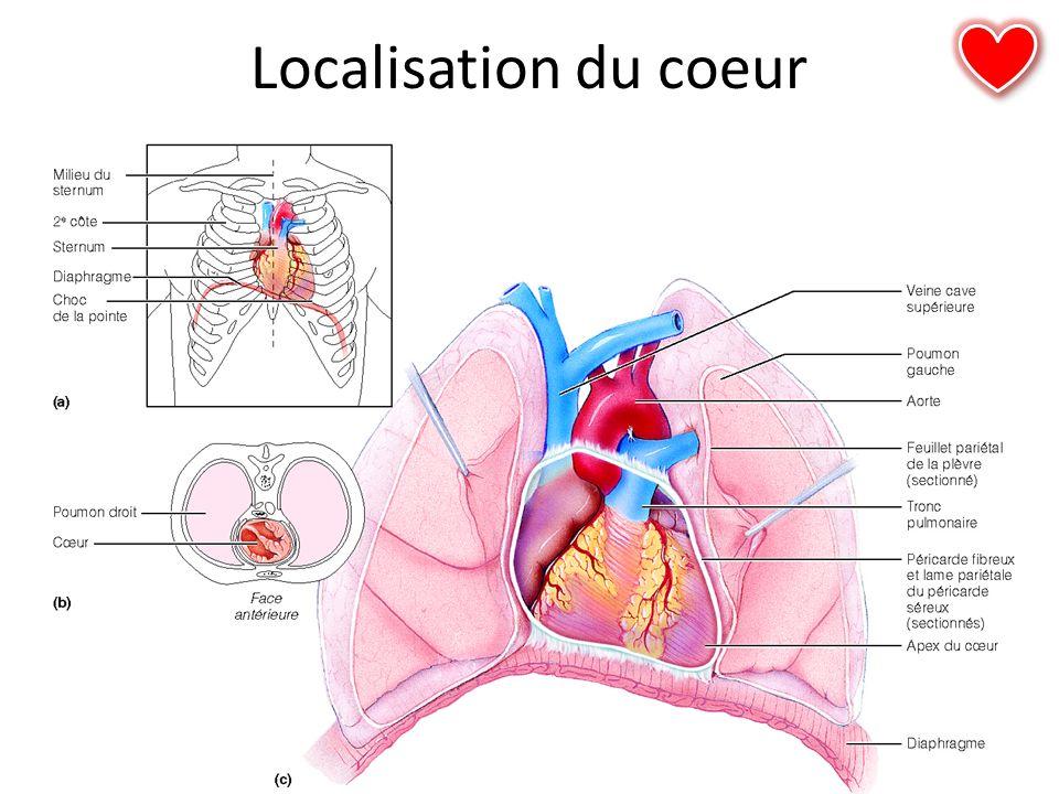 Localisation du coeur