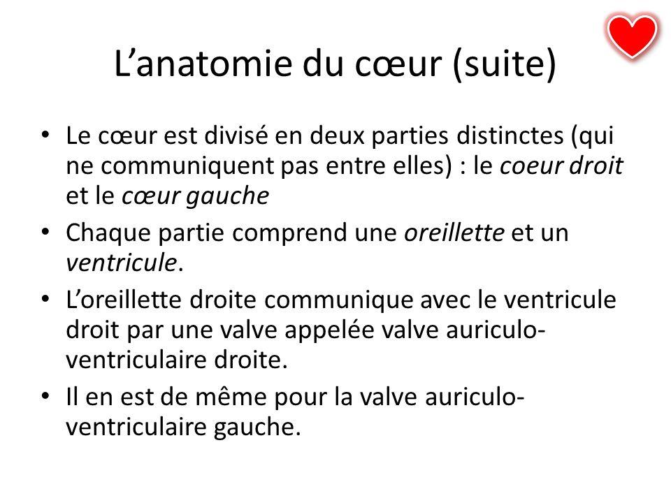 Lanatomie du cœur (suite) Le cœur est divisé en deux parties distinctes (qui ne communiquent pas entre elles) : le coeur droit et le cœur gauche Chaqu