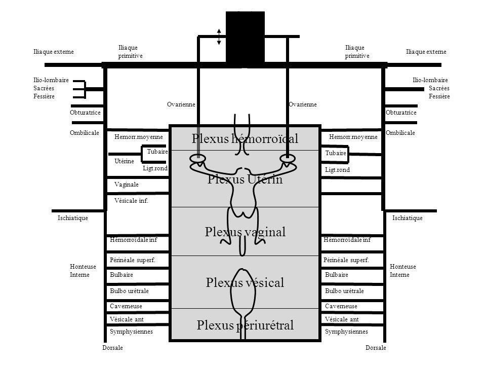 Canal dAlcock Orifice externe du Canal inguinal Point I Aponévrose superficielle du périnée Point P 1 1 Veine honteuse interne 2 2 Veine périnéale superficielle 3 Veine hémorroïdale inférieure 4 Veines bulbaires et dorsales du clitoris 5 5 Veine honteuse externe 4 6 Veine du ligament rond 6 7 7 Veine grande saphène 8 8 Veine fessière 9 9 Veine ischiatique