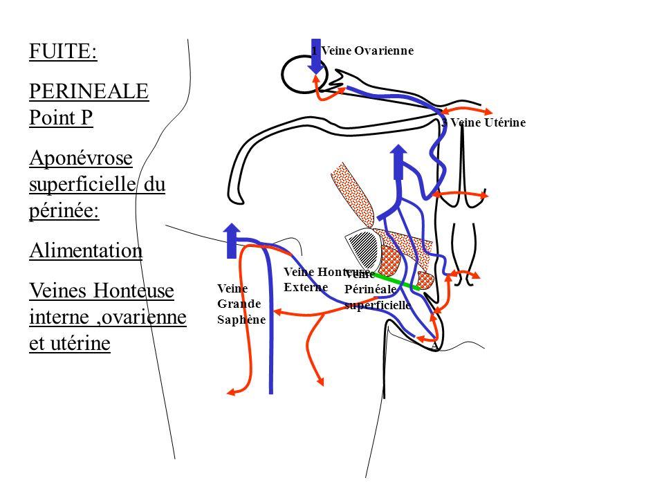 A FUITE: PERINEALE Point P Aponévrose superficielle du périnée: Alimentation Veines Honteuse interne,ovarienne et utérine 3 Veine Utérine 1 Veine Ovar
