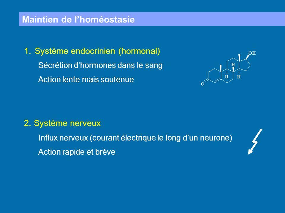 Maintien de lhoméostasie 1.Système endocrinien (hormonal) Sécrétion dhormones dans le sang Action lente mais soutenue 2. Système nerveux Influx nerveu