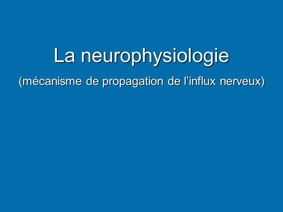 La neurophysiologie (mécanisme de propagation de linflux nerveux)