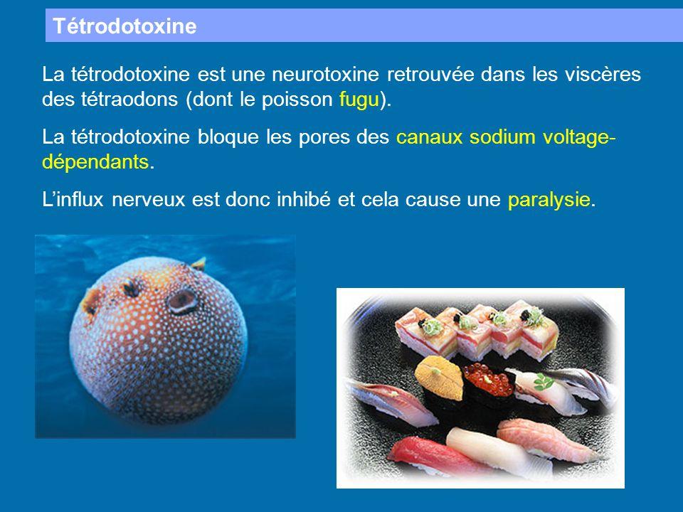 Tétrodotoxine La tétrodotoxine est une neurotoxine retrouvée dans les viscères des tétraodons (dont le poisson fugu). La tétrodotoxine bloque les pore