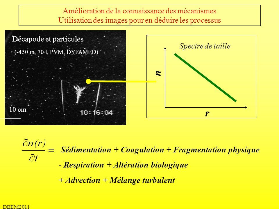 DEEM2011 Amélioration de la connaissance des mécanismes Utilisation des images pour en déduire les processus Sédimentation + Coagulation + Fragmentati