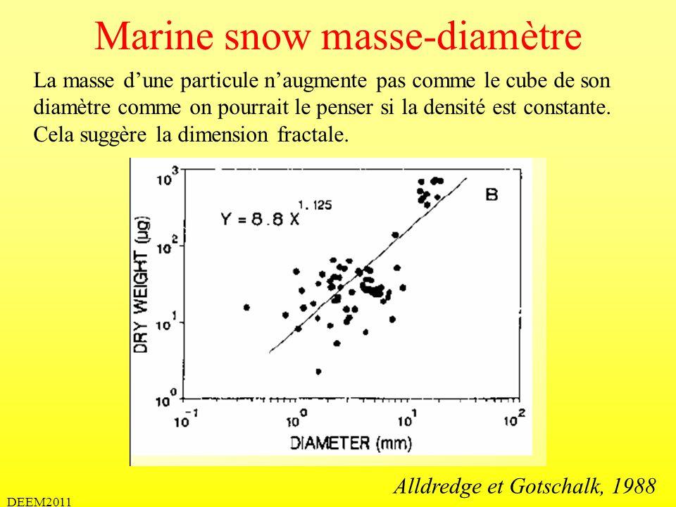 DEEM2011 Marine snow masse-diamètre La masse dune particule naugmente pas comme le cube de son diamètre comme on pourrait le penser si la densité est