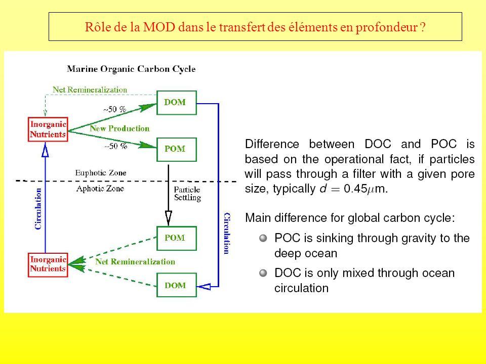 Rôle de la MOD dans le transfert des éléments en profondeur ?