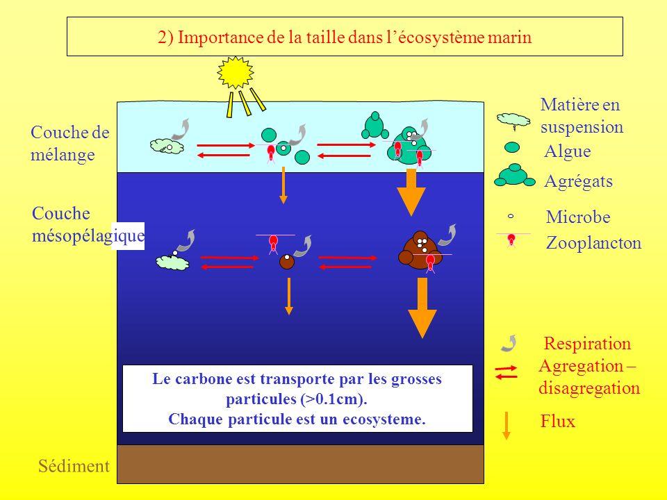 2) Importance de la taille dans lécosystème marin Couche de mélange Microbe Zooplancton Agregation – disagregation Matière en suspension Flux Algue Ag