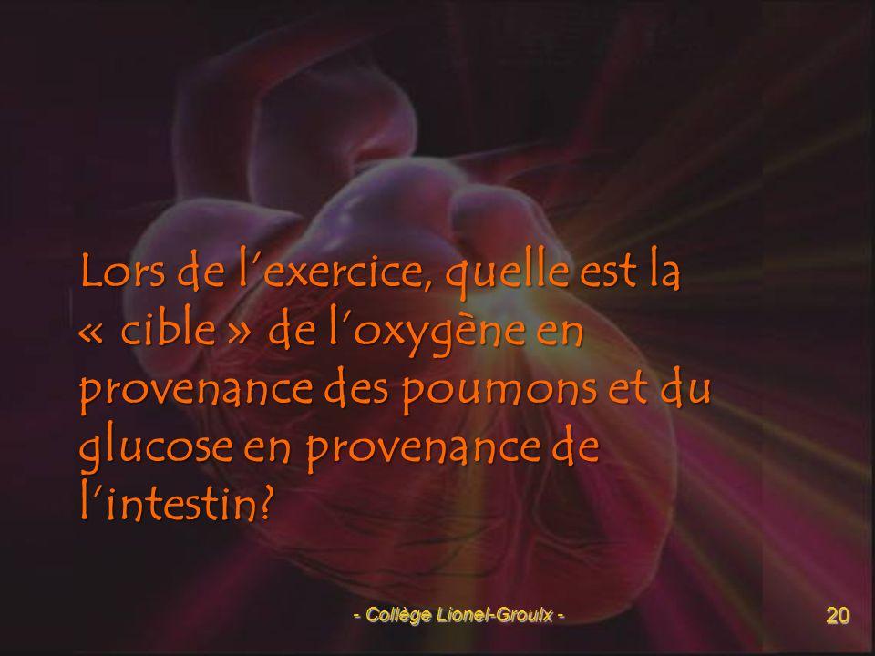 La destination du glucose et de loxygène - Collège Lionel-Groulx - 21