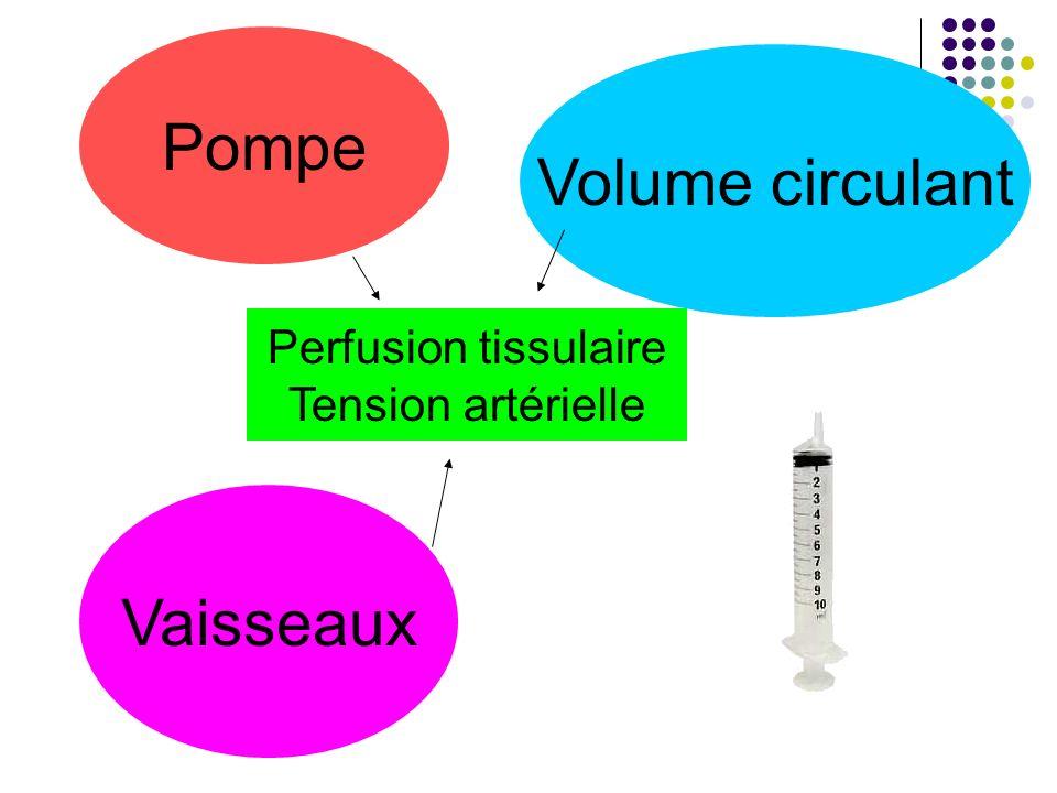Pompe Volume circulant Vaisseaux Perfusion tissulaire Tension artérielle
