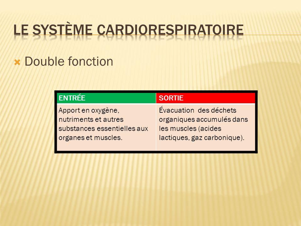 envoyer le sang appauvri en O 2 vers les poumons envoyer le sang oxygéné dans le reste du corps