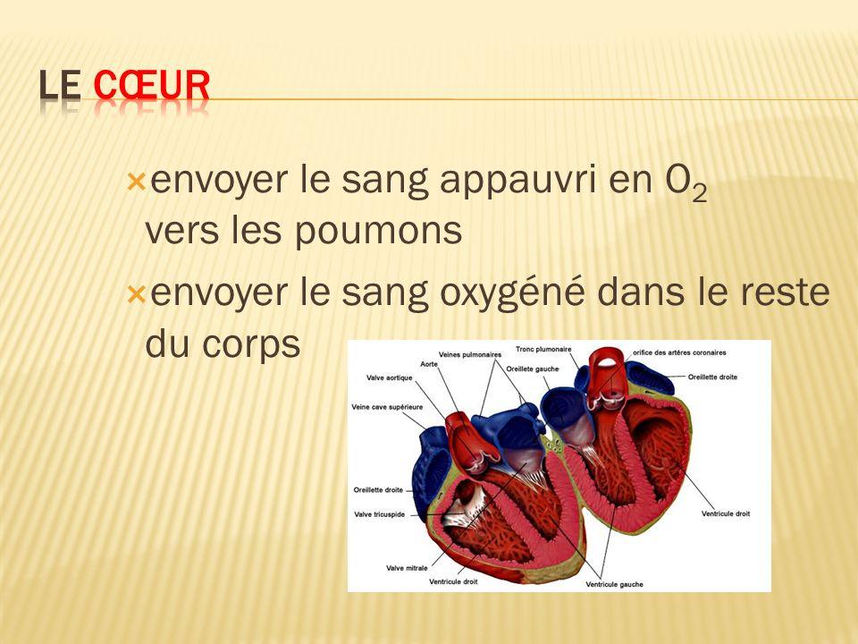 Artères transportent le sang hors du cœur Veines ramènent le sang au cœur Capillaires apportent loxygène aux muscles lentraînement cardiovasculaire permet daugmenter le nombre de capillaires dans les fibres musculaires