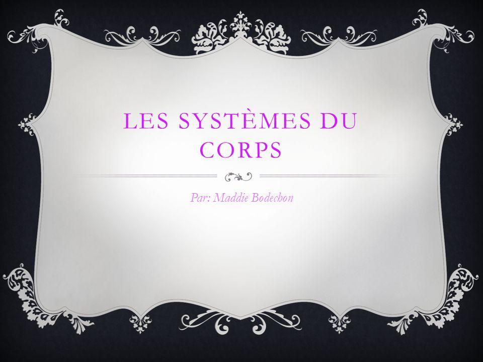 LES SYSTÈMES DU CORPS Par: Maddie Bodechon